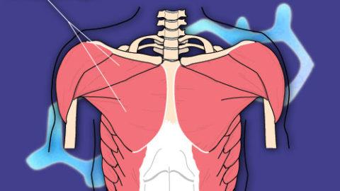 Øvelser for bryst