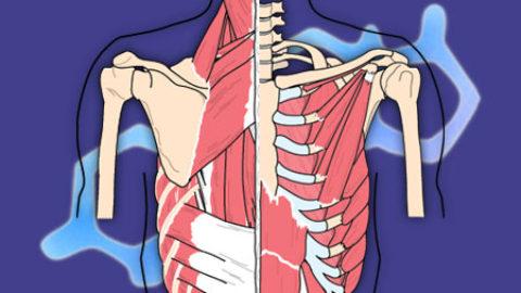 Øvelser for rygg
